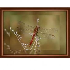 КС1068 Набор для изготовления картины со стразами 'Полёт стрекозы'