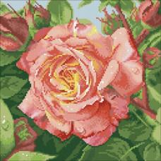 М-208 Чайная роза