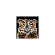 Ag 2351 Набор д/изготовления картин со стразами 'Любопытная сова' 20*20см Гранни