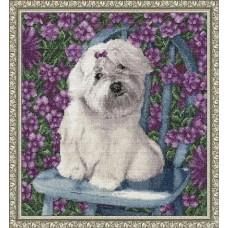 Болонка - Собаки
