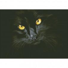 М-301 Черная кошка