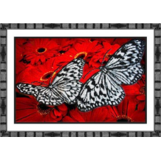 Б-1413 Бабочки на красном