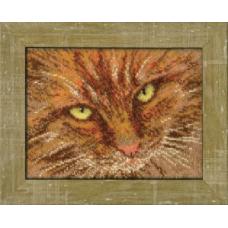 Б-063 Рыжий кот