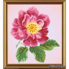 Бис3030 Рисунок на канве для вышивки бисером 'Цветок шиповника'