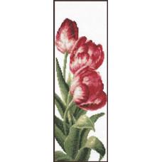 01.008 Тюльпаны