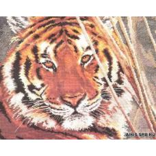 1-08 Тигр