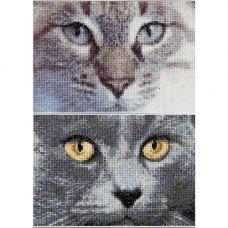 541А Кошки Джек+Луна