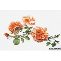 414А Три розы, Аида