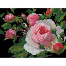 0002 Роза