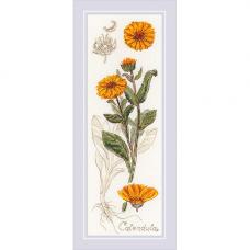1798 Набор для вышивания Риолис 'Календула'10*30 см