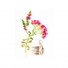 M777 Набор для вышивания РТО 'Цветущие травы'9,5*17 см